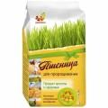 Пшеница для проращивания (зерно) 500гр